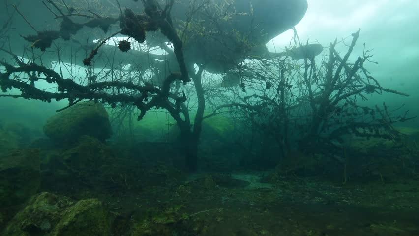 trees underwater