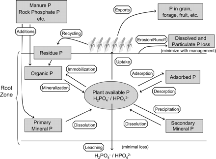 Phosphorus Sources and Management in Organic Production Systems