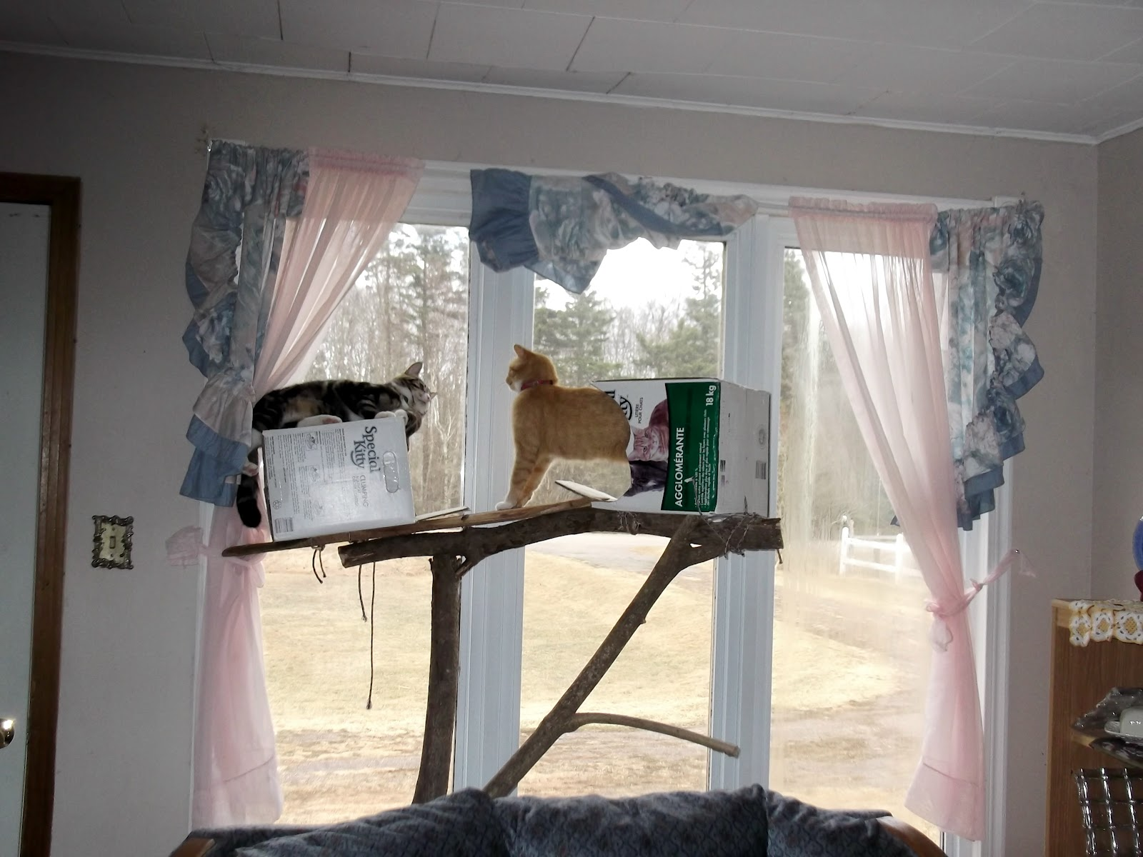 An-improvised-cat-tree