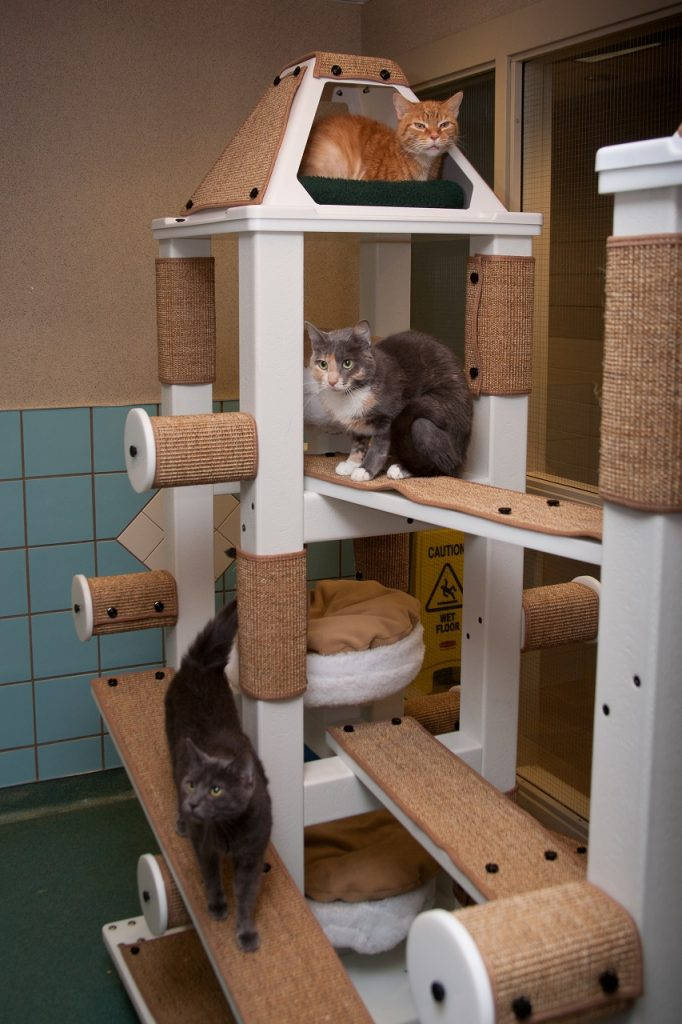 Cats in-a-cat-tree-vertical-climbing-space